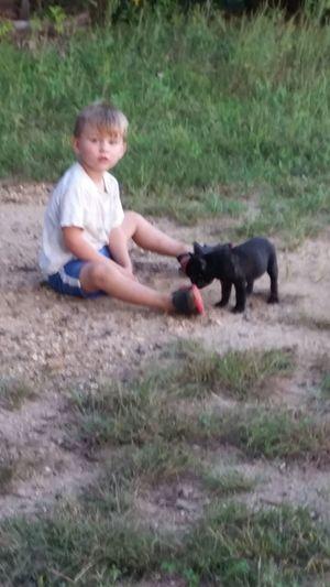 Best Friends ❤ Missouri Ozarks, USA 💥💖 👫 Grandkids 💙💛💜 💯 Country Life Family 🙏🙌 Pets Childhood Full Length Dog Playing Grass Purebred Dog Preschooler Bulldog French Bulldog Puppy