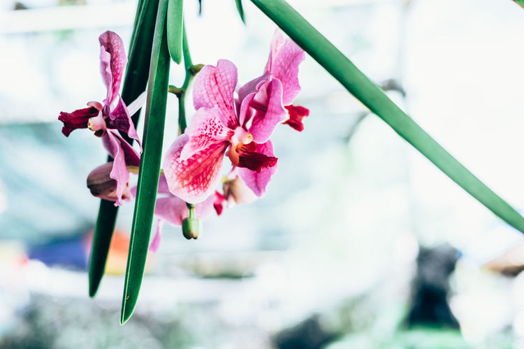 orchid Copy Space Exotic Green Color Orchid Backgrounds Beauty In Nature Blooming Day Flower Flower Head Focus On Foreground Fragility Freshness Growth Magenta Minimal Nature Outdoors Petal Pink Color Plant Wild