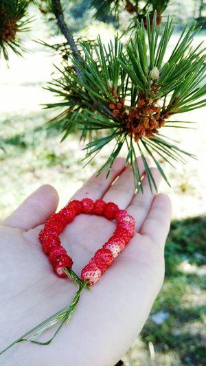 Dağçileği Çilek Tadında Bir Gün Red And Green Bolu..TURKEY Nature_collection Nature Strowberries Red Strowberry Time ;*Strowberry Eyeem Fruit In The Mountains Nereden Türkiye Bolu  Gerede Ovacık Yaylası