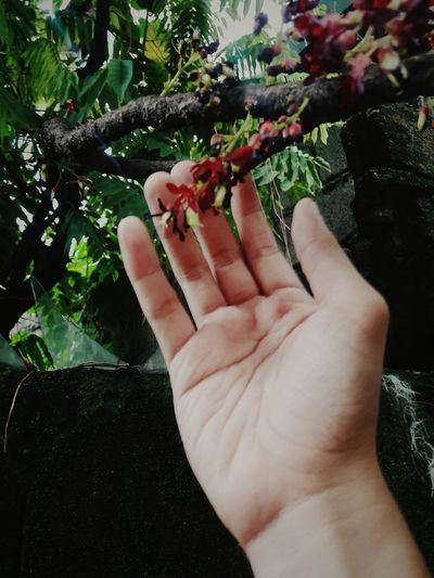 Touching nature Touch EyeEm Selects Outdoor Plant Fruit Men Food And Drink Growing Human Finger Personal Perspective