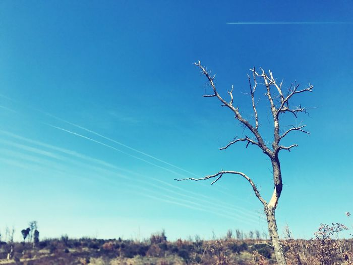 Dead Tree EyeEm