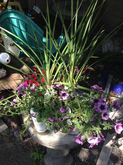 Zen Garden 2015. Is it 420 yet?