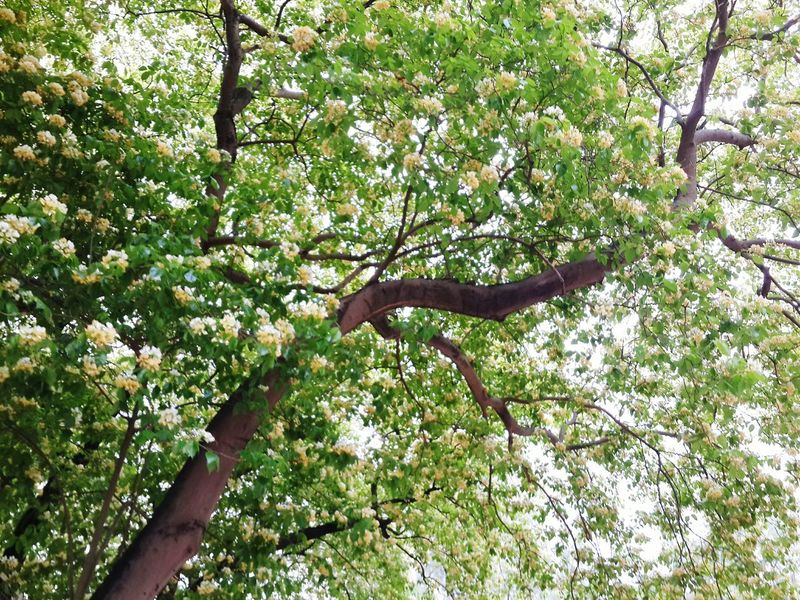 2015 Life In Hong Kong · Enjoying Life Nature_collection Nature Photography Eye4photography  Trees Photooftheday