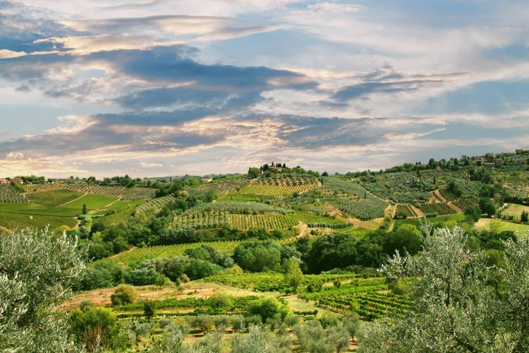Tuscany landscape from San Gimignano Agriculture Beauty In Nature Cloud - Sky Crop  Cultivated Land Day Farm Field Green Color Growth High Angle View Idyllic Landscape Nature Outdoors Plant Plantation Rural Scene Scenics Sky Tranquil Scene Tranquility Travel Destinations Tree Vineyard