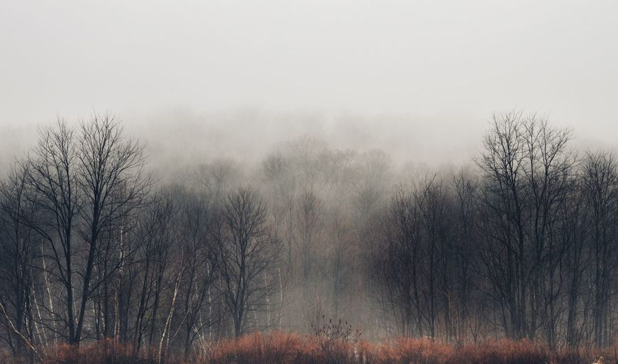 Gaias Breath Nature Nature_collection Nature Photography Fog Foggy Day Trees Forest Woods Mountain Mountains Nature_perfection Moody Atmospheric Mood Dark Mist Mothernature Hiking Tree Cold Temperature Fog Winter Water Snow Forest Sky Landscape