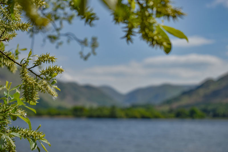 Looking over Lake Ullswater Sky And Clouds Selective Focus Lake District Nikon Beauty In Nature Lake Ullswater Landscape Mountains Nature Outdoors Sky Tranquility Foreground Leaves