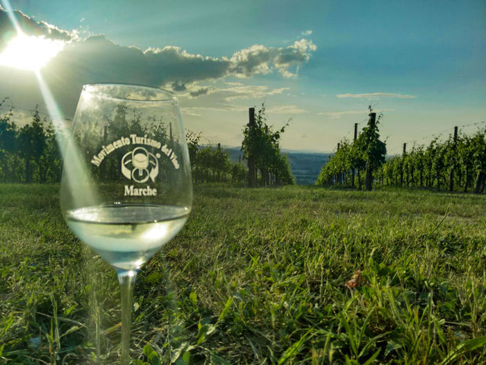 Alcohol Beauty In Nature Cantineaperte Cantineaperte2016 Cloud - Sky Day Drinking Glass Field Grass Growth Landscape Marche Movimentoturismodel Nature No People Outdoors Scenics Sky Tree Wine Wineglass