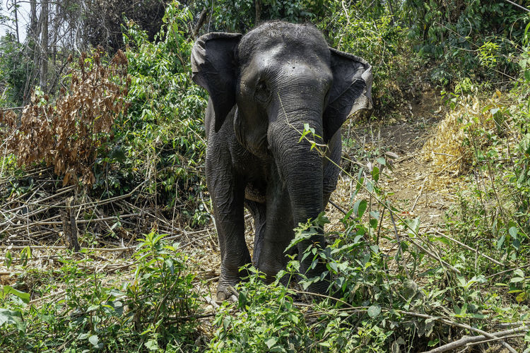 Elephant standing in a forest