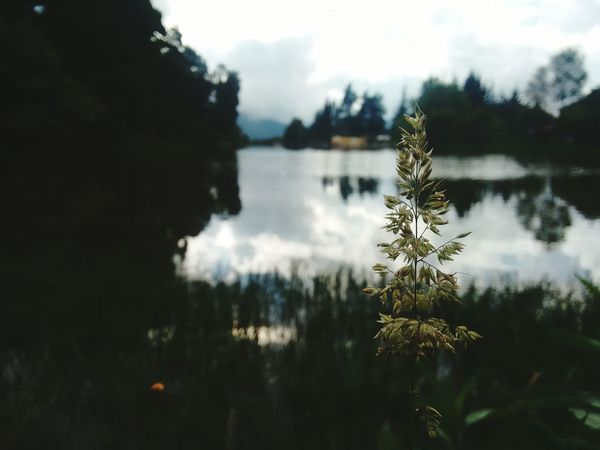 Water Nature Tranquility No People Day Photography Facatativa Flowers,Plants & Garden Nature Photography Relaxing Time Photo Nature Photograhy Nature Plant Nature_collection Tree Natural Beauty Naturaleza