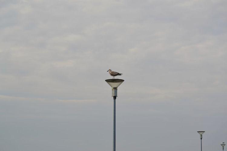Bird Perching White Stork Stork Full Length Sky Cloud - Sky Sea Bird Flock Of Birds