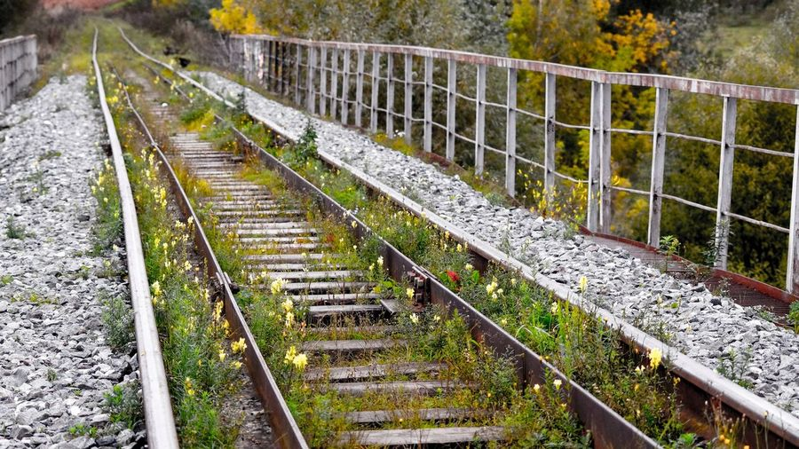 РЖД Россия Railing Outdoors Day Nature No People Tree Beauty In Nature