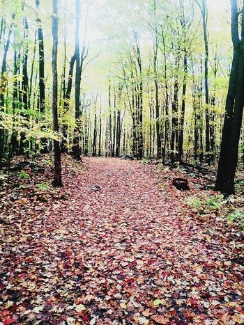 Tree Nature Leaf Forest Growth Beauty In Nature Change Autumn Abundance Day Outdoors Scenics Tree Trunk Tranquility No People Lost In The Landscape