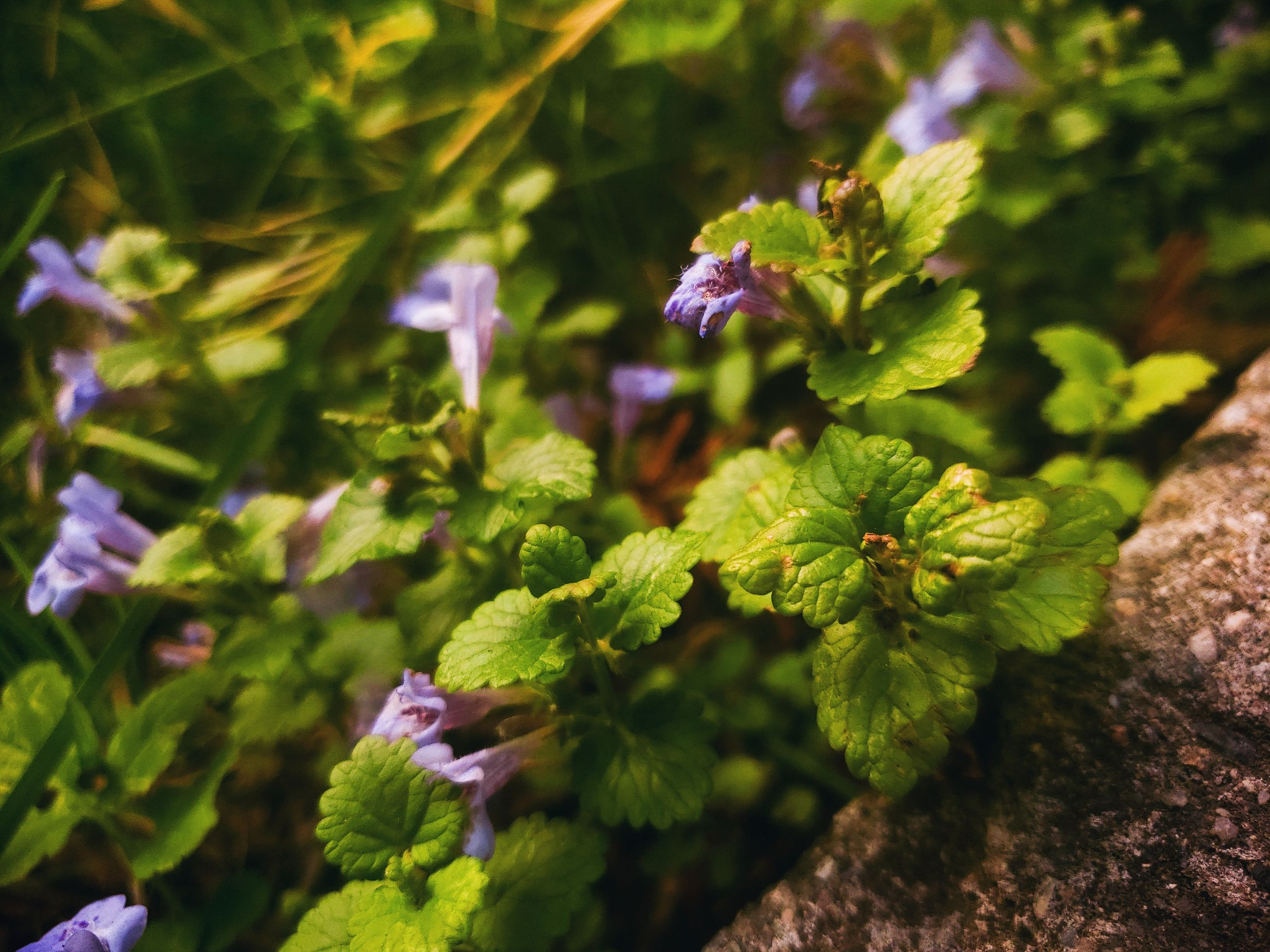 growth, plant, beauty in nature, close-up, nature, no people, selective focus, day, green color, fragility, vulnerability, leaf, plant part, focus on foreground, freshness, outdoors, flower, flowering plant, tranquility, purple, flower head