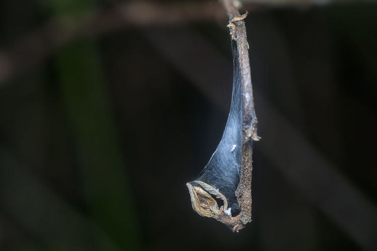 Hanging tiny dried twig with webcob.