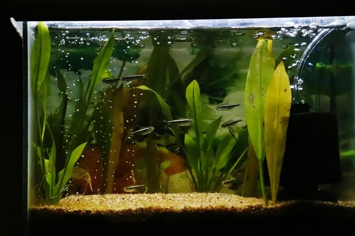 Perspectives On Nature Underwater Water Grass No People Indoors  Nature Freshness Greenhouse Tinys Little Nature Fishtank Fish World