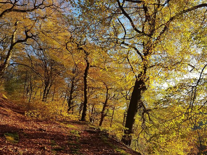 Nature Full Frame Day Beauty In Nature Backgrounds No People Sunlight Outdoors Low Angle View Tree Branch Close-up Sky Autumn Eaves Wood Mytholm Calderdale WoodLand Forest Beauty In Nature Tree Nature Sunlight