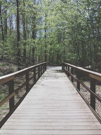 Bridge Light And Shadow Verdant Trees
