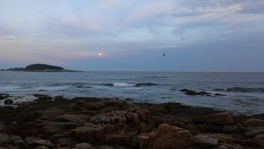 Beauty In Nature Flyingbirds Maine Peaceful View Rock Sea USA Vacation Vacations