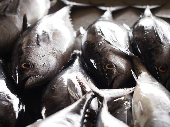 Euthynnus Affinis Fish Fish Market Healthy Eating Ikan Aya Ikan Tongkol Mackerel Mackerel Tuna Seafood Wet Market
