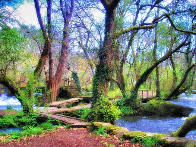 Galicia Galicia, Spain Tronco Y Ramas Tronco Y Musgo Galicia Calidade Bosques Bosque Colores Colors Bosquemagico Galicia,spain Paradise Bosque Y Vida