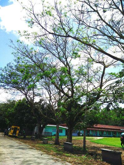 Tree First Eyeem Photo