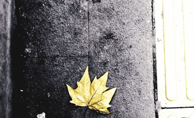 leaf on the street Yellow Leaf Fall Fall Beauty Fall Leaves Fall Colors Fallen Leaf Fall Season On The Road On The Street Fall Streets Maple Maple Leaf Leaf Autumn Yellow Change Close-up End Plastic Pollution