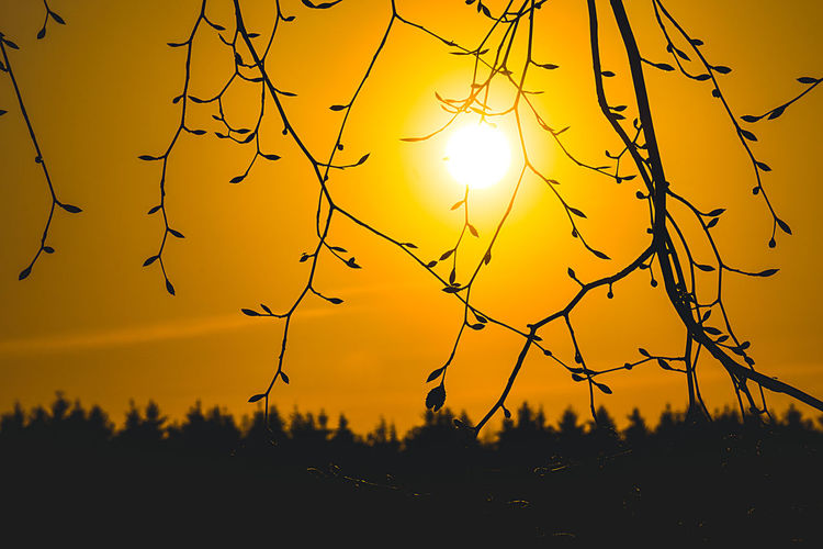 Silhouette Sky Sunset Beauty In Nature Sun Plant Scenics - Nature Orange Color Tree Tranquility Nature Tranquil Scene No People Idyllic Outdoors Non-urban Scene Growth Sunlight Branch Yellow EyeEm Best Shots EyeEm Nature Lover EyeEm Gallery My Best Photo
