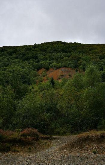 Rainy Days☔ In Wales Cwm Rheidol Wales❤ Huawei P9 Leica