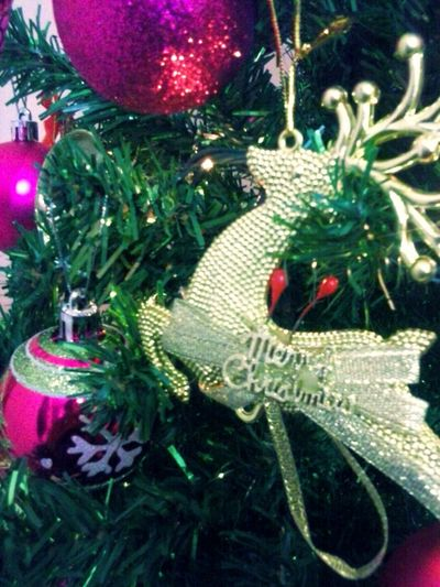 Pontodevista Olhardebolso Photpgraphy Christmas