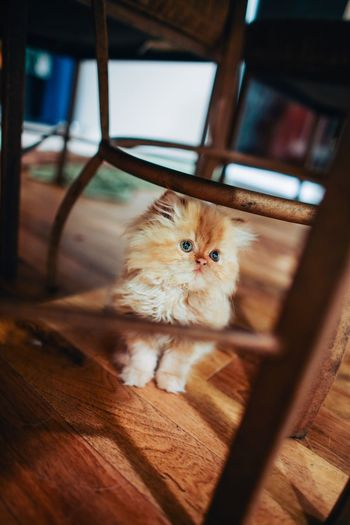 High Angle View Of Kitten Under Chair
