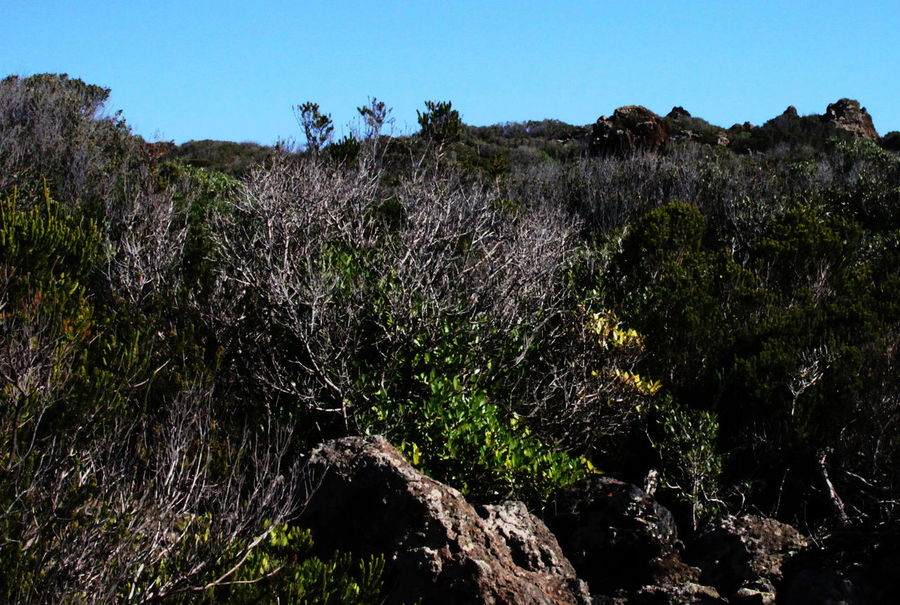 Pantelleria Beauty In Nature Clear Sky Day Flora Growth Landscape Nature No People October 2015 Outdoors Plant