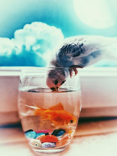 Impossible love Fish Japanese Fish Budgerigar Dissolving Water Drink Drinking Glass Underwater Cocktail Bubble Close-up Sky