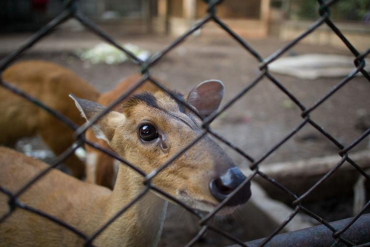 Close-up of deer in zoo