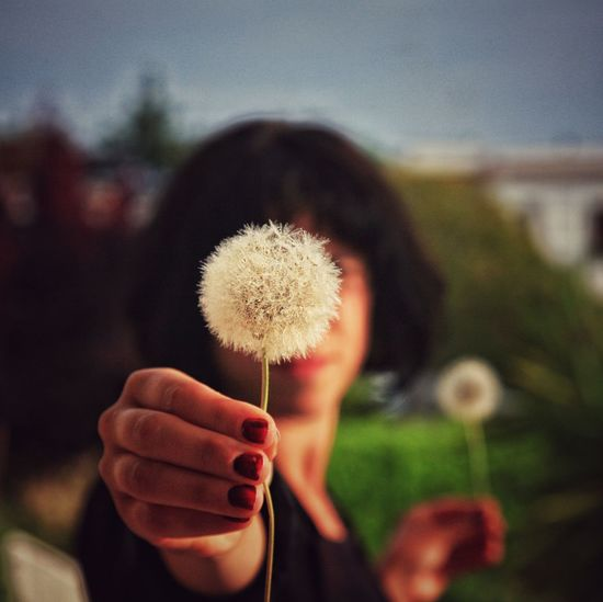 Beauty In Nature Close-up Dandelion Day Flower Flower Head Focus On Foreground Fragility Freshness Growth Human Finger Lifestyles Nature Part Of Person Selective Focus Stem Unrecognizable Person Moms & Dads