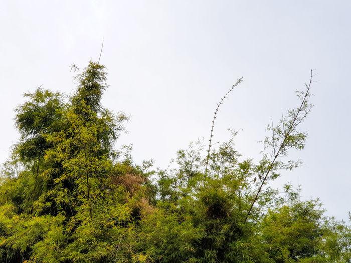 Nature Bamboo -