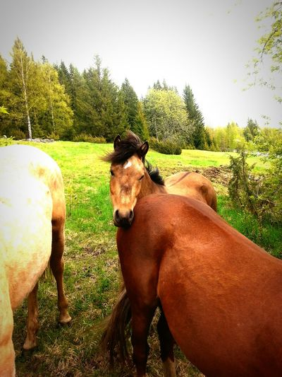 Playing With Animals Cute Animals Animals Beautiful Nature Popular Photos Beautiful Horses Beautiful Day Summer