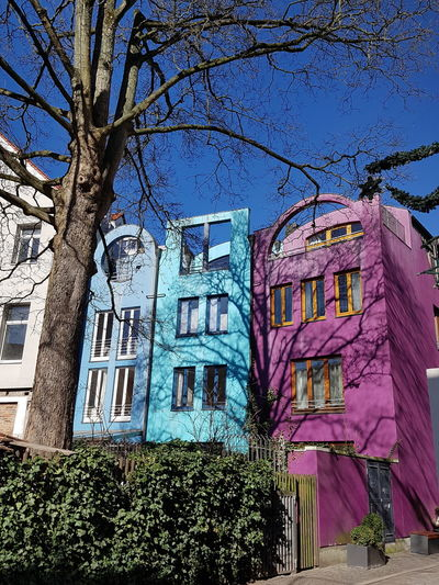 Colourful Houses with tree in front and tree shaddow on facade, under Deep Blue sky. ... Premium Premium Collection Twigs And Branches Twigs Shaddow Of A Tree On House Facade Shaddow Tree Colourful Pink Turquoise And Blue Deep Blue Sky No Edit/no Filter No Edits No Filters No Edit Blue Sky Turquoise Colorful Scenics Bremen Travel Destinations Tree City Sky Architecture Building Exterior Built Structure Neighborhood Location Residential  Destination Stories From The City The Architect - 2018 EyeEm Awards