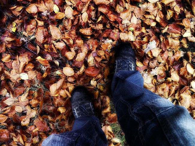 The Walk A Walk In The Woods Autumn EyeEm Best Edits EyeEm Best Shots EyeEm Best Shots - Autumn / Fall EyeEm Nature Lover Leaves Me Me And My Boots My Unique Style Popular Photos Relaxing Taking Photos