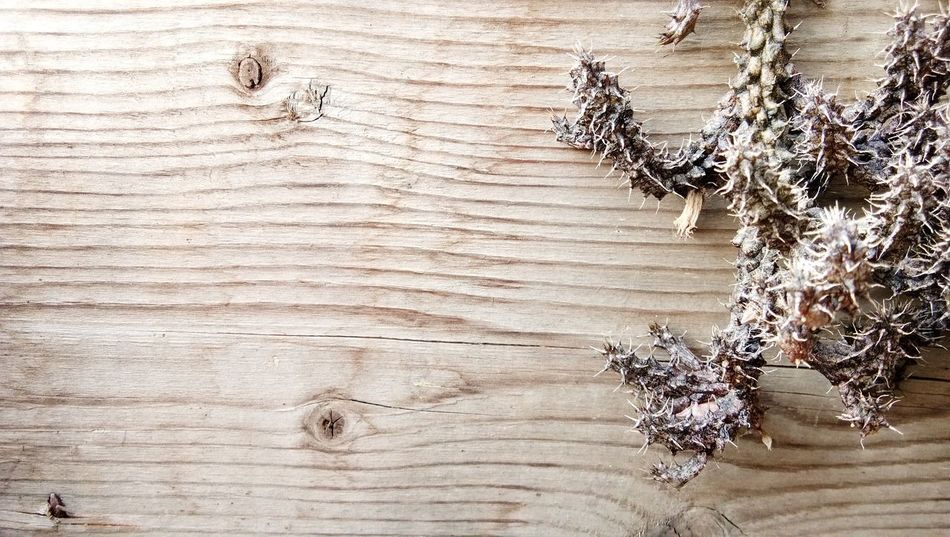 Backgrounds Christmas Decoration Pattern Wood - Material Wood Grain Textured  Close-up Pine Wood Needle - Plant Part Wood Paneling