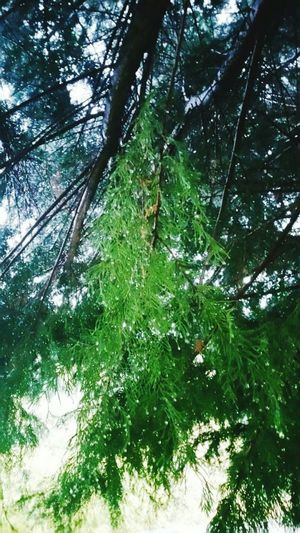 The Week On EyeEm Tree Rain Day Watchinton Oregonlife