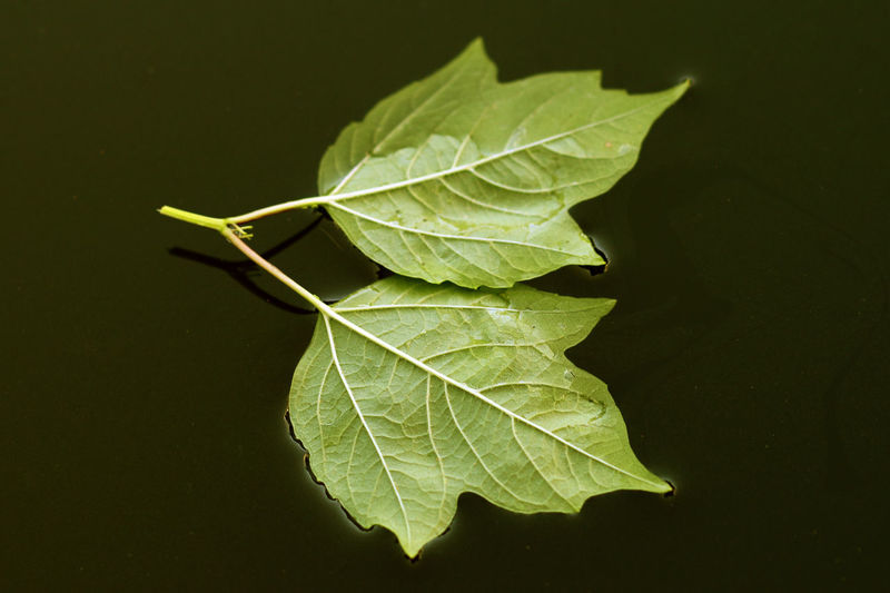 Leaves on dark water surface close - up view
