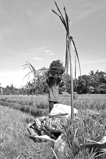 bali's iconic rice fields ASIA Bali INDONESIA Landscape Rice Field Rice Paddy Travel Photography Wanderlust Black And White B&W Portrait Streetphotography Street Photography Monochrome Working Man Carrying On Head Ubud