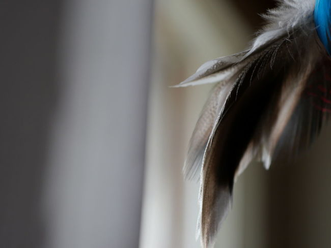 Art And Craft Feathers Nature Pattern, Texture, Shape And Form Animal Themes Close-up Craft Day Feather  Feathering Feathers Of A Bird Fragility Germany Indoor Indoor Photography Indoors  Indoors  No People One Animal Selective Focus Softness Structure Vertebrate White Background White Color
