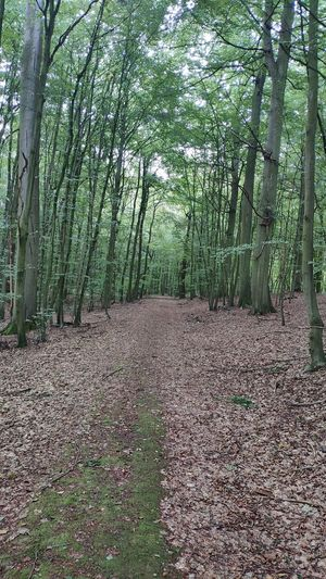 Waldweg Tree