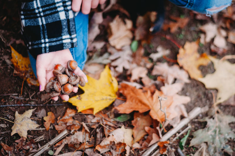 Leaf Plant Part Autumn Human Hand Hand Human Body Part Leaves One Person Nature Day Land Dry Real People Holding Change Outdoors Lifestyles Leisure Activity Field Body Part Finger Acorn