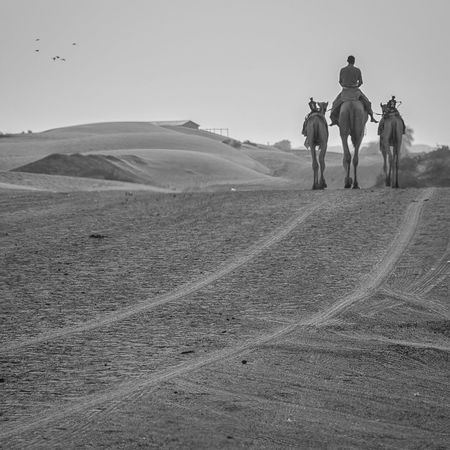 Domestic Animals Riding Horse Horseback Riding Desert Real People Men Mammal Outdoors Leisure Activity One Animal Nature Sand Day Landscape Lifestyles Arid Climate One Person Sky Only Men