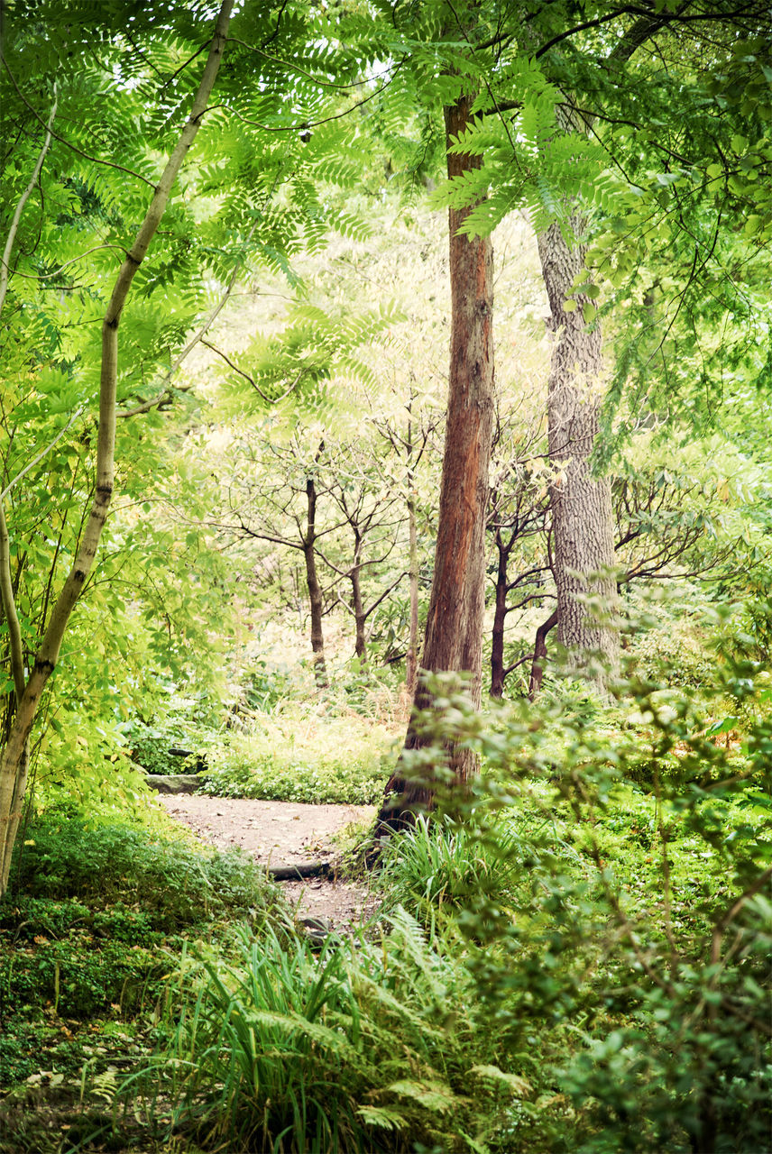 nature, tree, beauty in nature, forest, tranquil scene, tranquility, scenics, green color, tree trunk, growth, no people, day, outdoors, landscape, branch