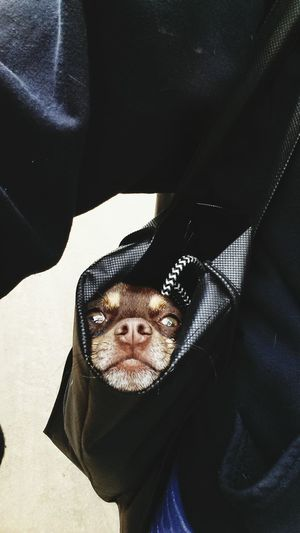 Midsection Of Man Holding Dog In Bag