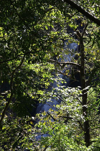 waterfall seen