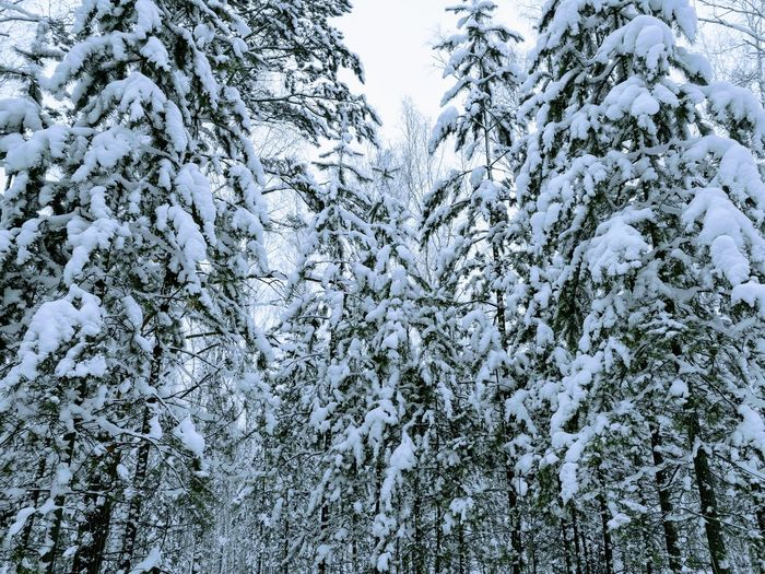 Beauty In Nature Snow Winter TreesNo People Siberia, Russia Mobile Photography Huawei P9 Leica